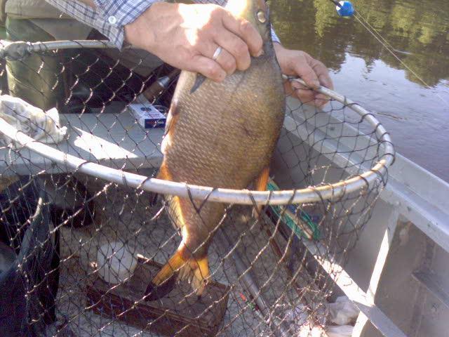 самодельные снасти для рыбалки видео