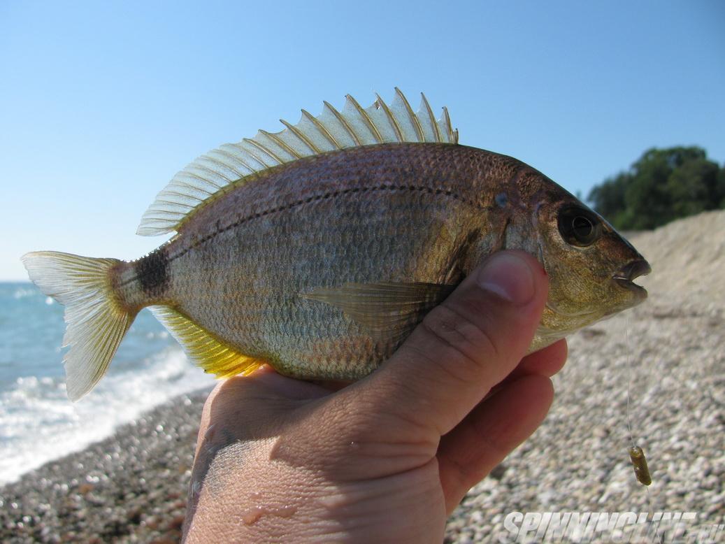 мюссера абхазия рыбалка есть
